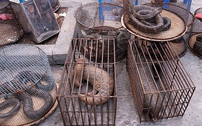Myanmar Illicit Endangered Wildlife Market. Photograph by Dan Bennett / Wikimedia Commons